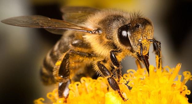 صورة معلومات عن النحل للاطفال , هيا ناكل العسل