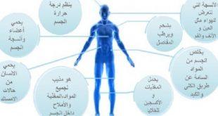 صورة الرطوبة فى الجسم , اسباب و اضرار الرطوبه لجسمك