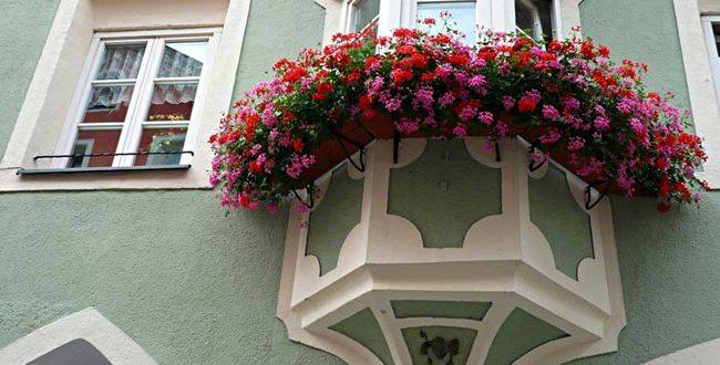صورة زراعة الزهور في المنزل , اهمية زراعة الزهور بمنزلك