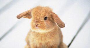 صورة صور صغار الحيوانات , اجمل صور للحيوانات الصغيره