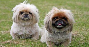 جميع انواع الكلاب بالصور كلاب متنوعة حزن و الم