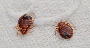 شركة مكافحة البق , كيفيه التخلص من الحشرات
