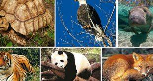صورة بحث عن الحيوانات , معلومات هامة عن الحيوانات