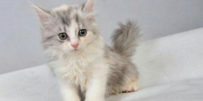 صورة صور قطط رومي , اجمل صور قطط