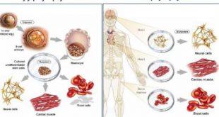 صورة تجدد خلايا الجسم , كيف تقي نفسك من الامراض