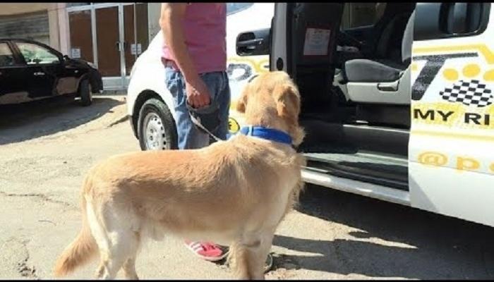 صورة سيارات نقل الكلاب , كيفية نقل الحيوانات الاليفه
