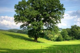 صورة بحث عن الاشجار , دور الاشجار بدورة الحياه
