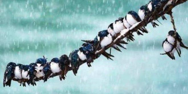 صور الطيور على اشكالها تقع شعر , ياليت قلوبنا مثل الطيور