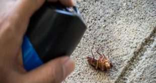 صورة كيفية التخلص من الصراصير بطريقة طبيعية , يلا نقول وداعا للصراصير ومن غير تعب