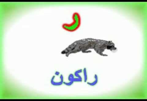 صورة حيوان بحرف ر , زود حصيلتك في اسماء الحيوانات