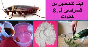 صورة كثرة الصراصير في البيت , كيفية التخلص من الصراصير