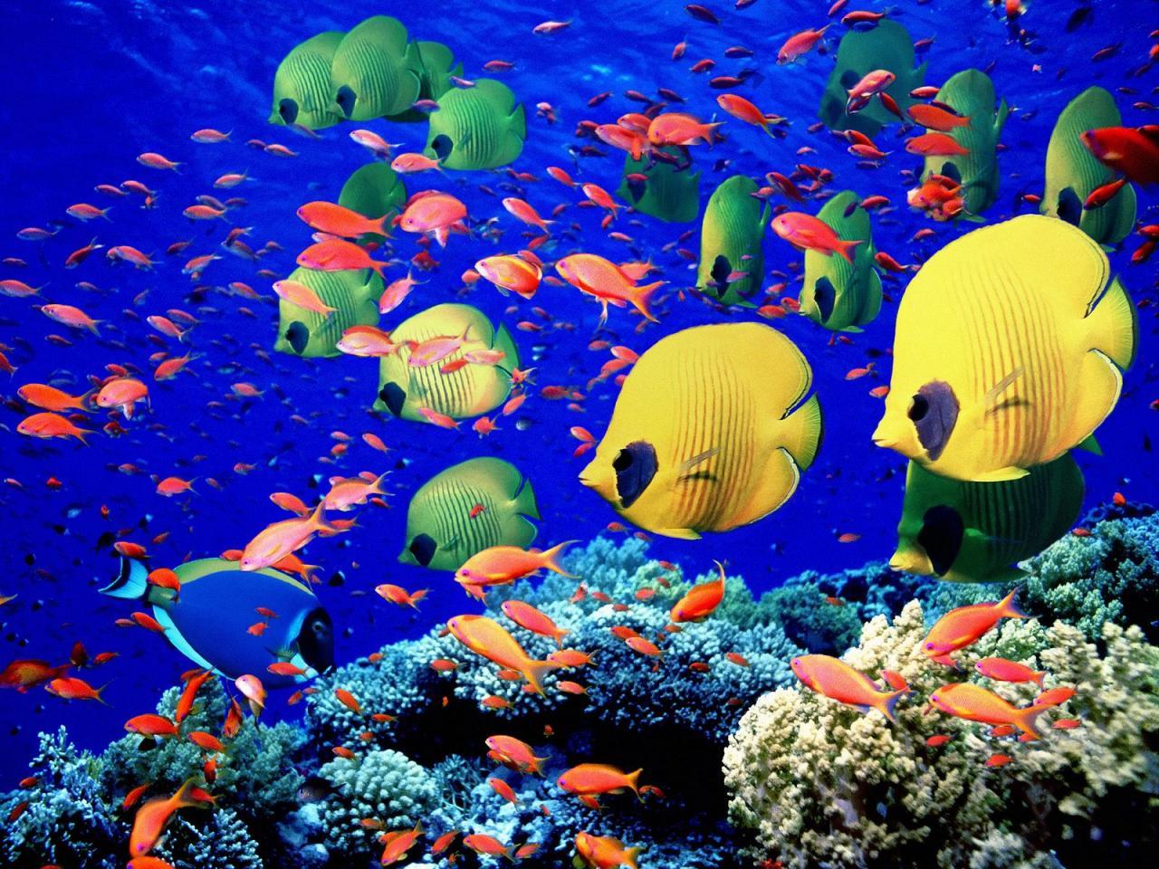 صورة موضوع تعبير عن رحلة الى البحر , البحر و جماله للتمتع 1998 1