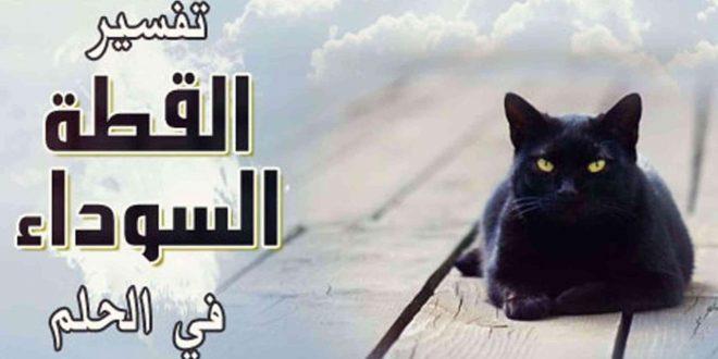 صورة رؤية قط ميت في المنام , تفسير رؤية القط في الحلم