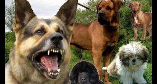 صورة جميع انواع الكلاب بالصور , كلاب متنوعة