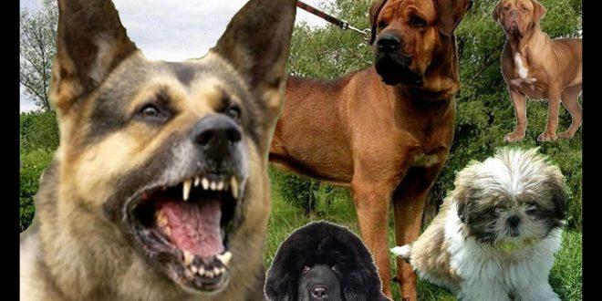 صور جميع انواع الكلاب بالصور , كلاب متنوعة