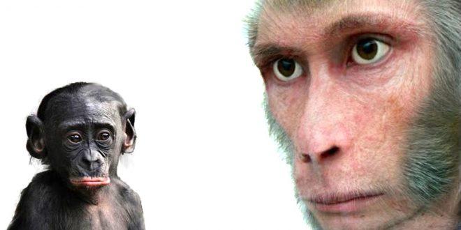صورة هل اصل الانسان قرد , ياتري ايه اصل الانسان