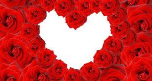 صورة صور قلوب حب ورد , احلي هدية في عيد الحب