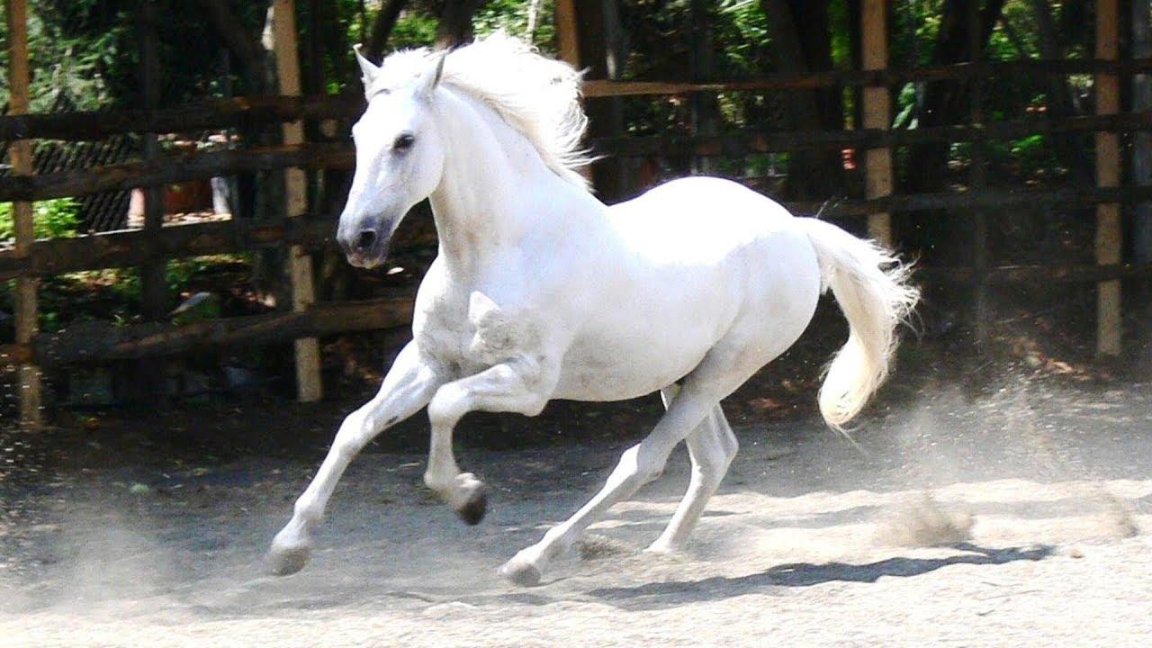 صورة تفسير الحصان الابيض , روية حصان ابيض في الحلم 3564 1