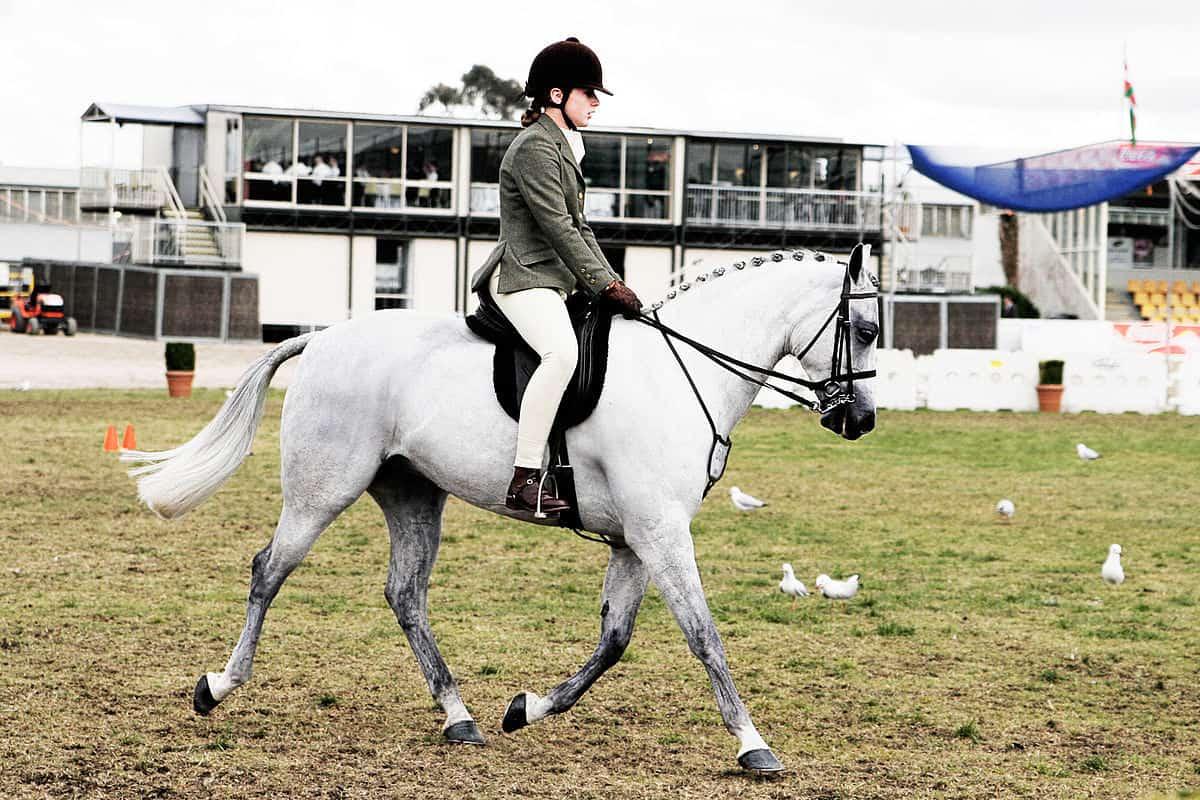 صورة تفسير الحصان الابيض , روية حصان ابيض في الحلم 3564 2