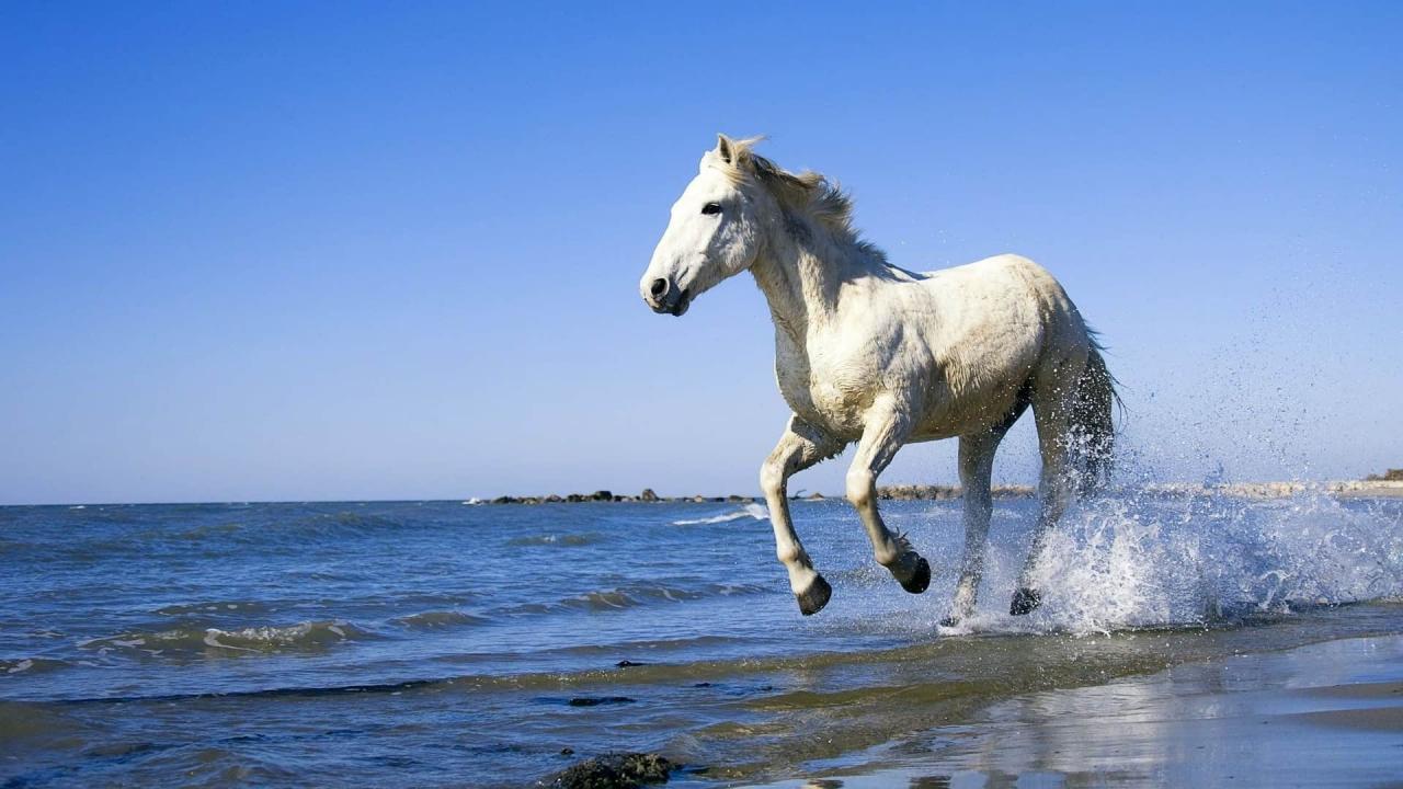 صورة تفسير الحصان الابيض , روية حصان ابيض في الحلم 3564