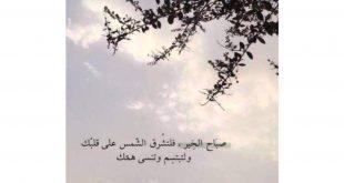 صور كلمات الصباح والتفاؤل , جدد صباحك كل يوم