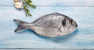صورة شكل سمك الدنيس , كائن بحرى فريد من نوعه