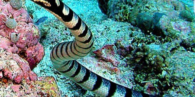 صورة اسماء الحيوانات البحرية , المعجزات البحرية
