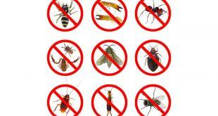 صورة انواع الحشرات المنزلية , حشرات البيت المتعبة