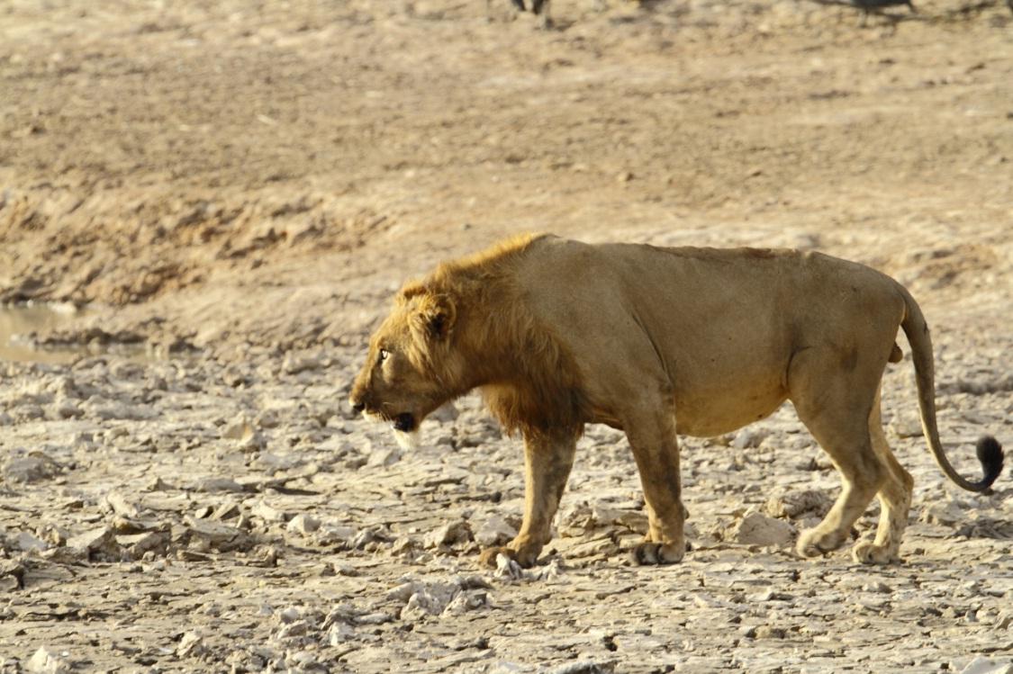 صورة من الحيوانات الافريقية , اهم الحيوانات المهددة بالانقراض