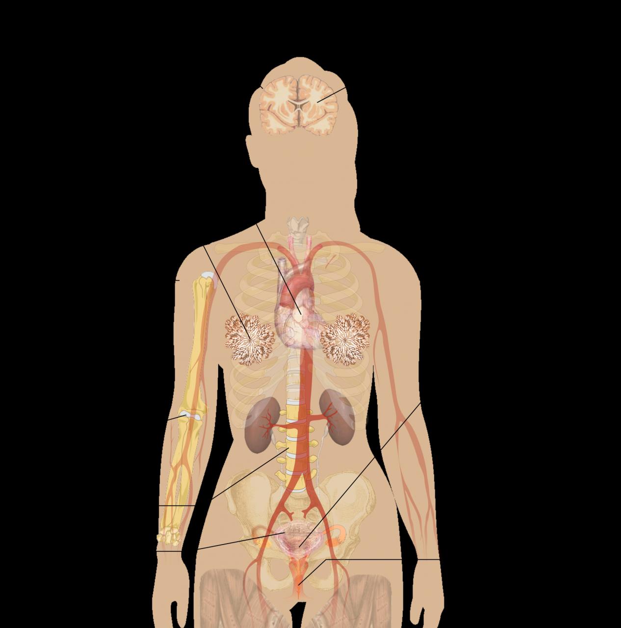 صورة ما هو الطمث , اعراض الطمث الملحة