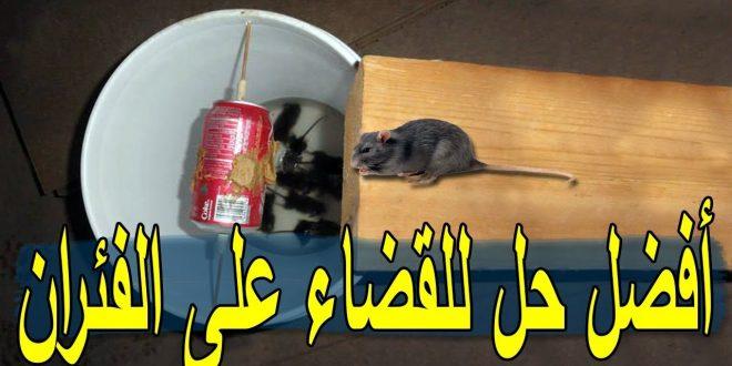 صورة حل للقضاء على الفئران , اسهل الحلول لمشكلة الفئران
