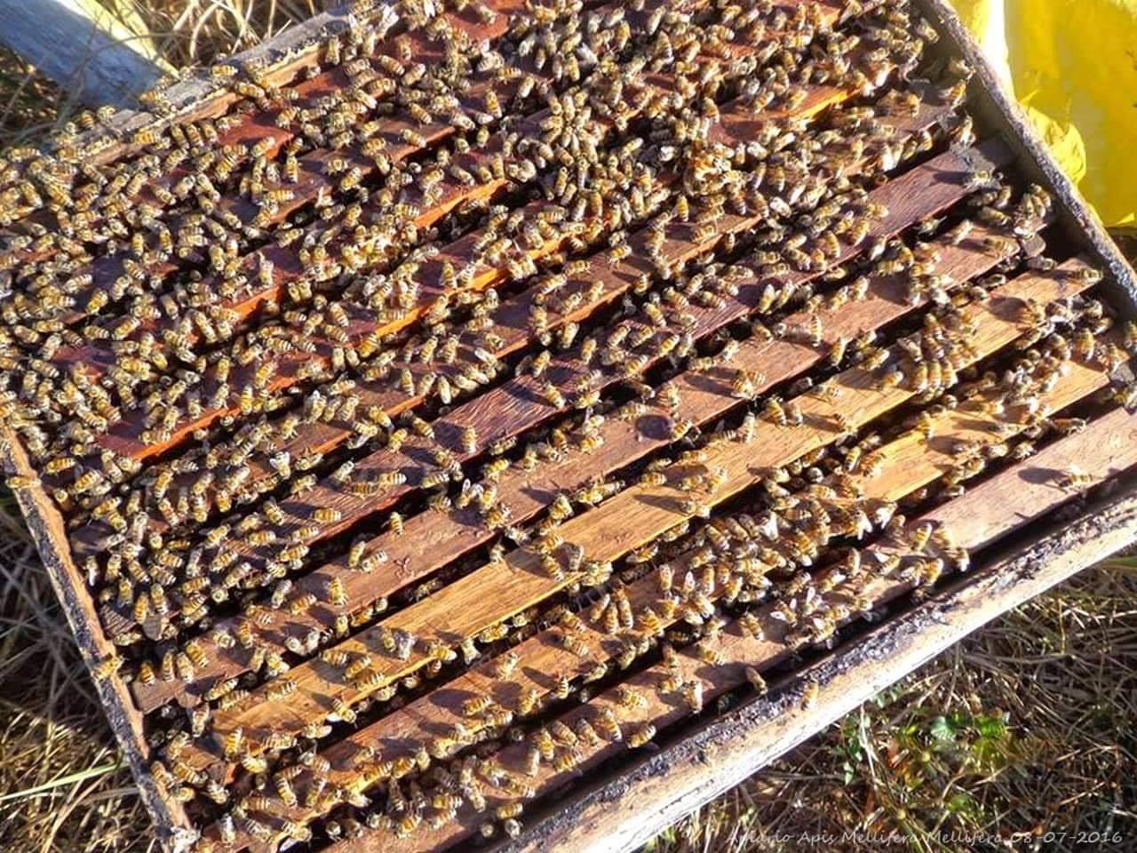 صورة خلية النحل بالصور , النحل و اعظم فوائده