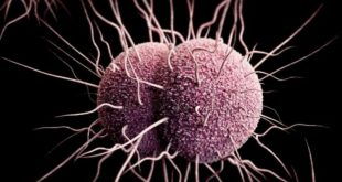 صورة هل بكتيريا الدم خطيرة , اهم اسباب بكتيريا الدم
