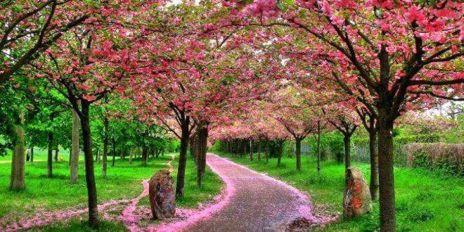 صورة اروع الصور للطبيعة , اجمل الصور للطبيعة