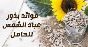 صورة مش معقول فوائد بذور نبات دوار الشمس للمرأة الحامل,فوائد حب عباد الشمس