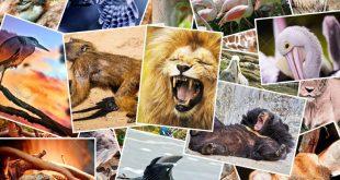 صورة كل حيوان و ليه تفسير , حيوانات في المنام