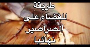 صورة وصفة للقضاء على الصراصير 1061 3 310x165