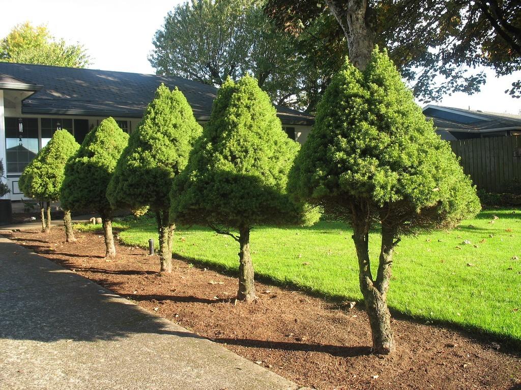 صورة افضل اشجار حديقة المنزل 1940 7