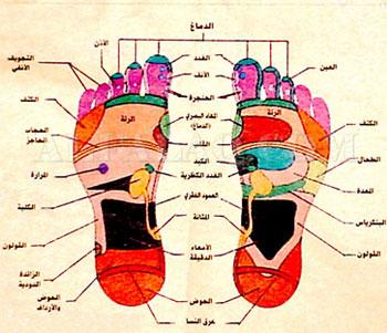 صورة خريطة الجسم في باطن القدم 147